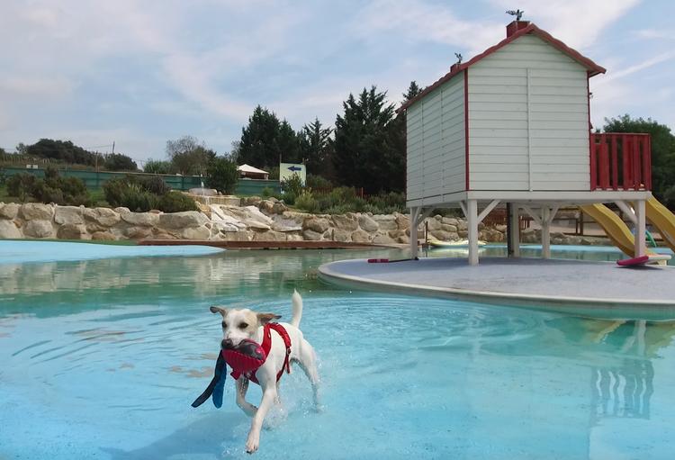 Todas Las Piscinas Y Parques Acuáticos Para Perros En España Pipper On Tour