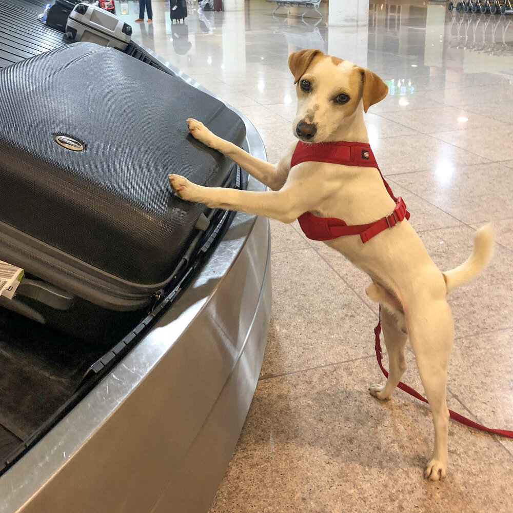 Recogiendo las maletas.