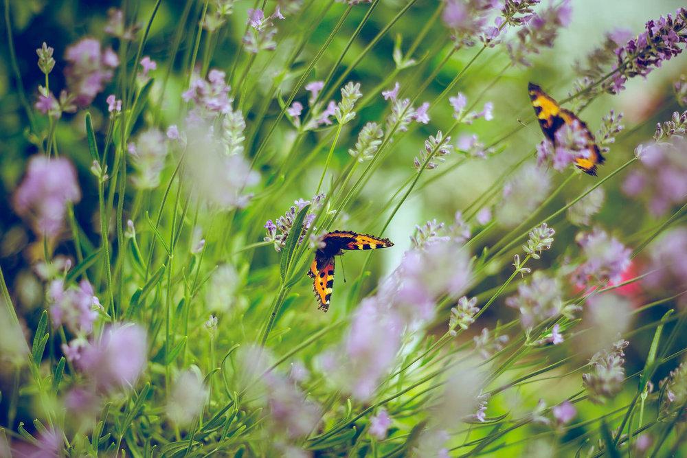 Wandsworth Common Butterflies