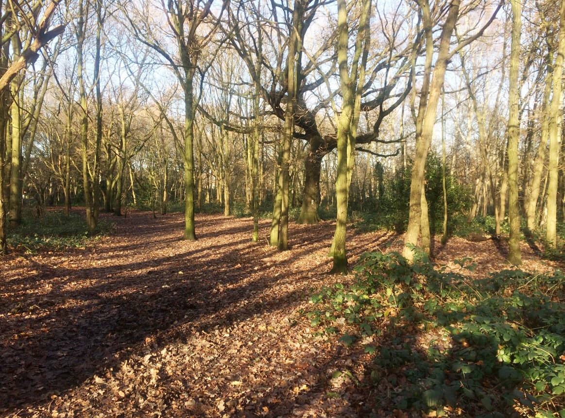 Wandsworth Woodlands