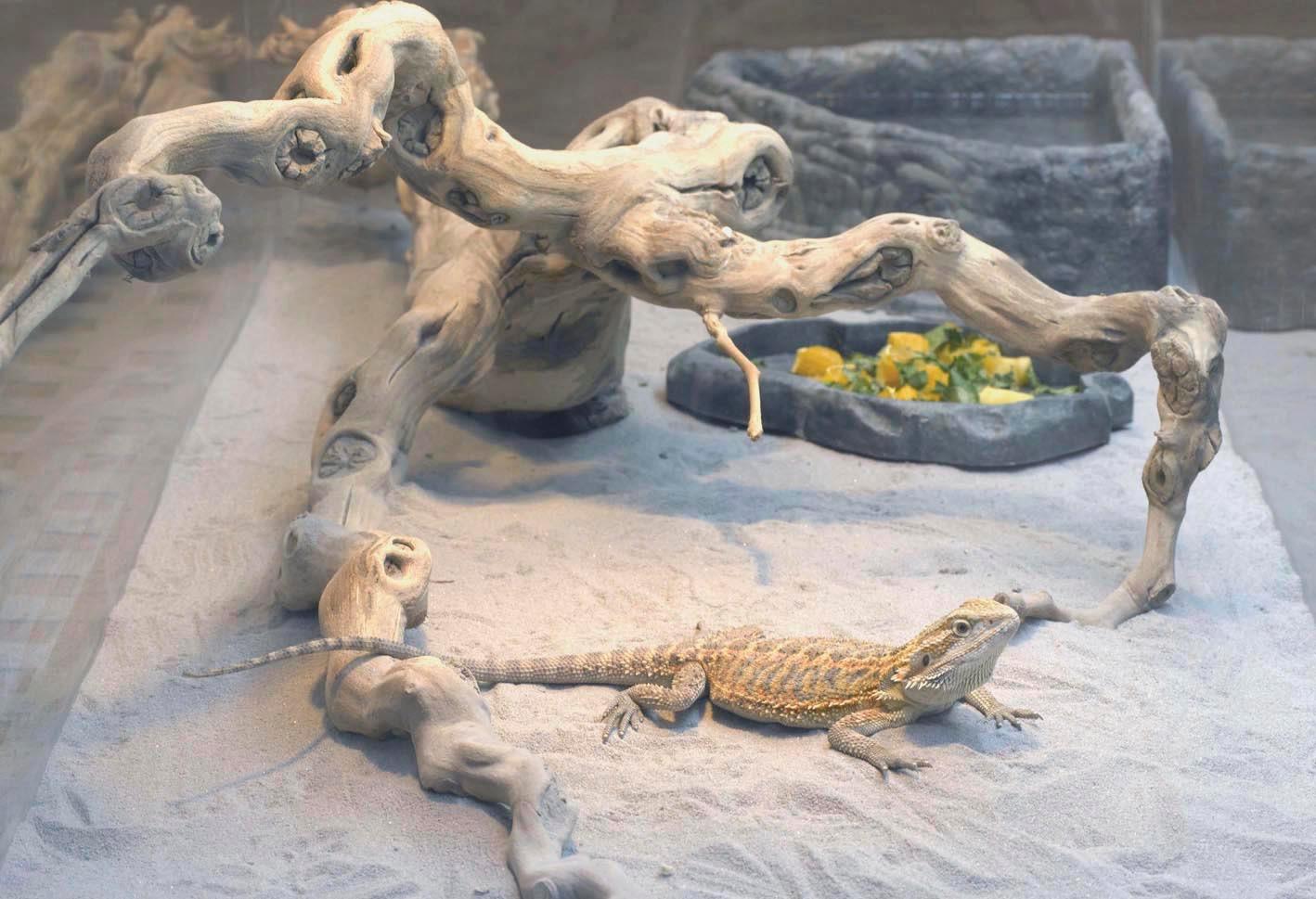 lizard detail2.jpg