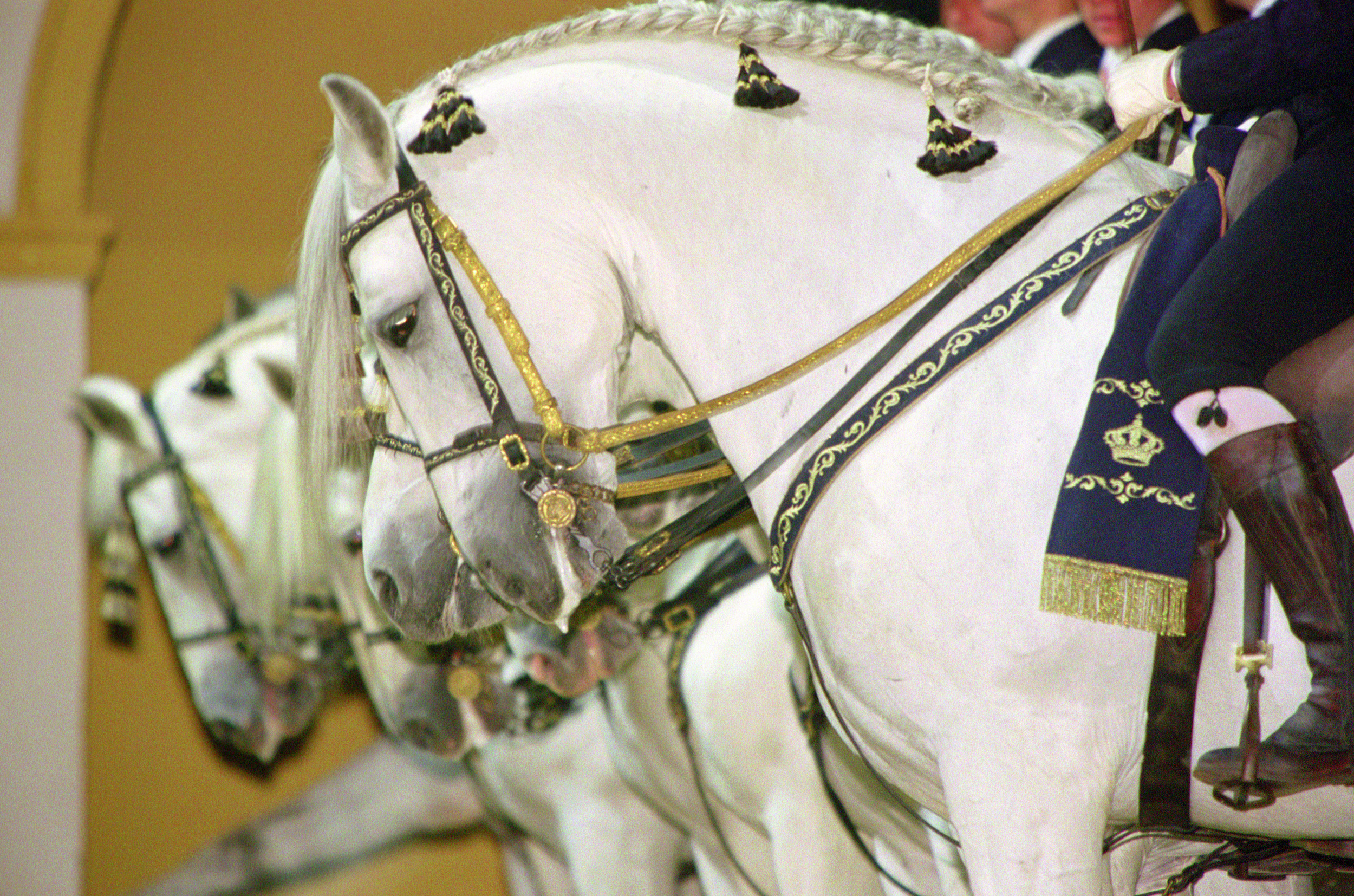 See horses dance at the Royal Andalusian School of Equestrian Art