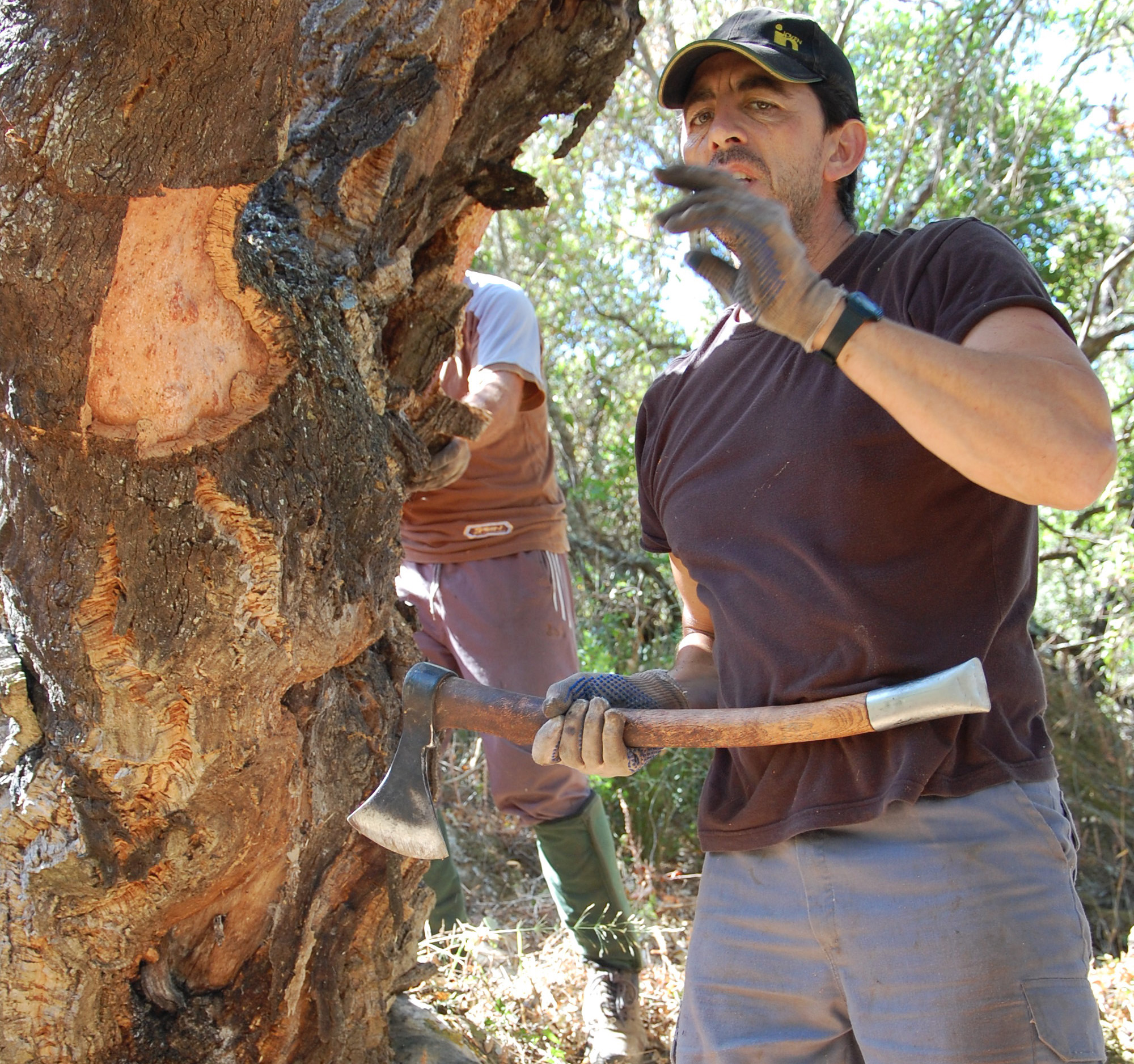 cork harvest Andalucia
