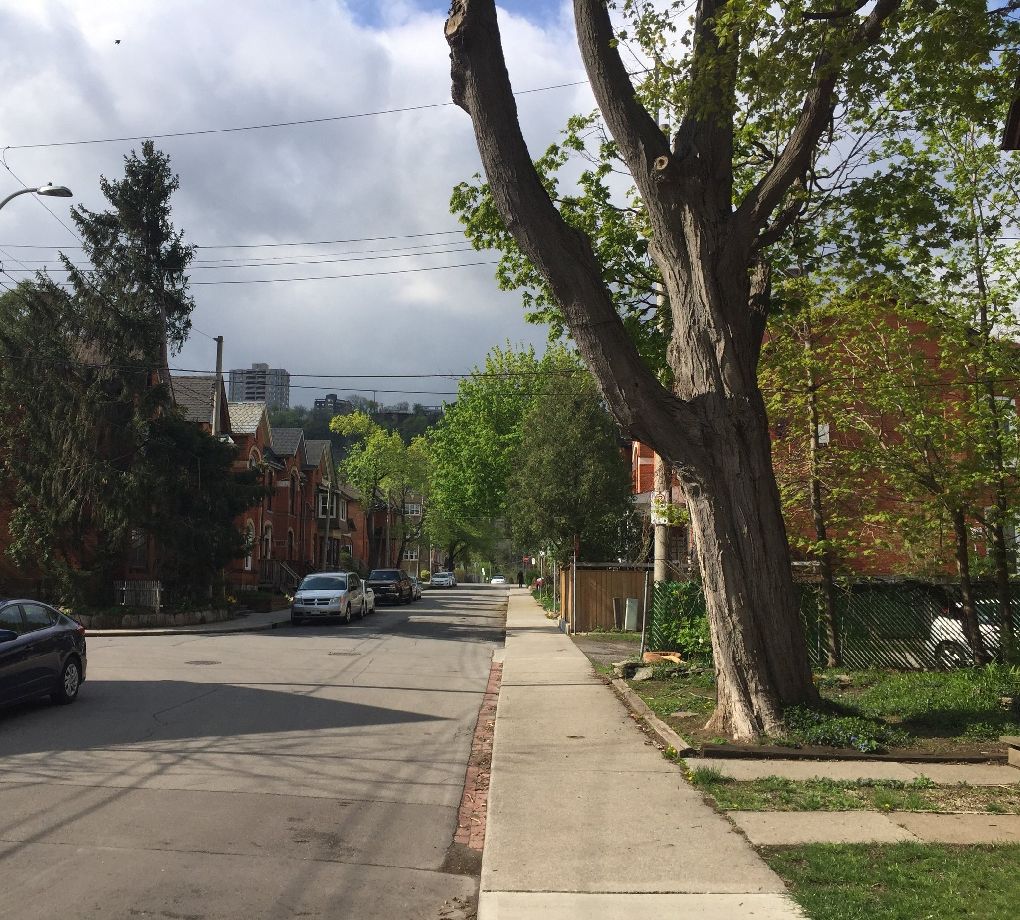Many municipalities in southern Ontario have implemented tree protection by-laws and policies. Others are following suit.