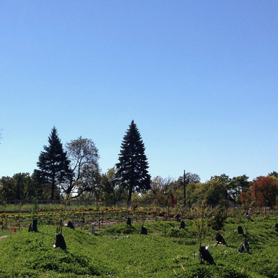 Frogtown Farm - Food Forest
