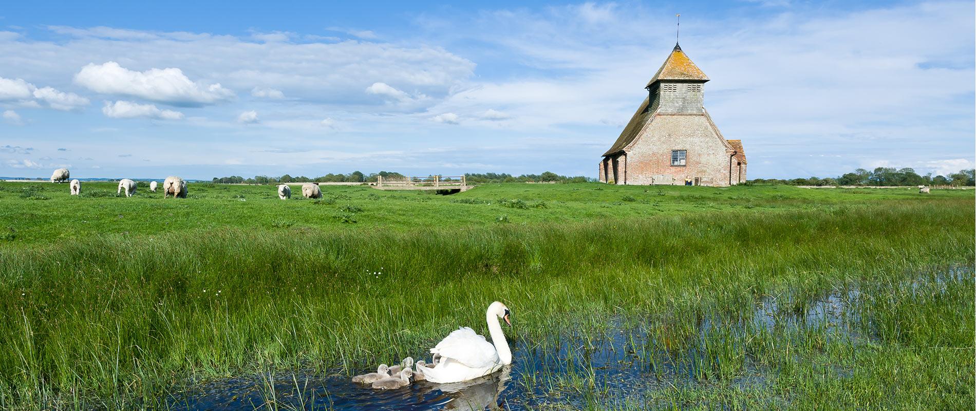 romney-marsh-wildlife.jpg