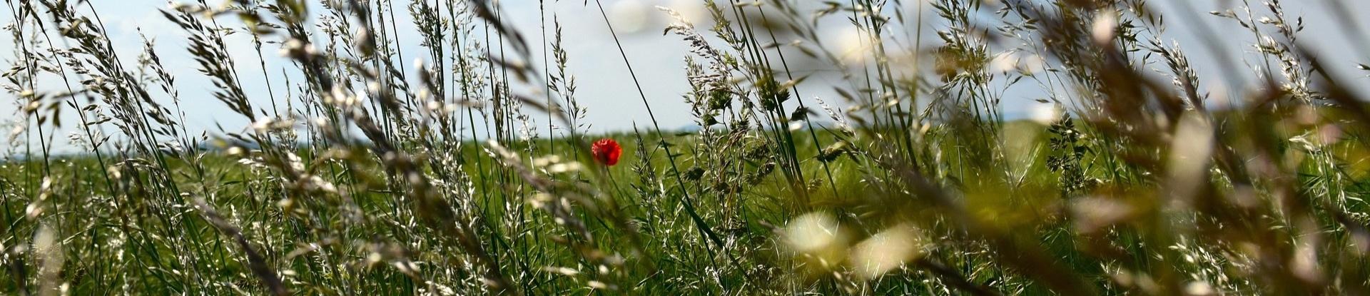 grass-seeds.jpg