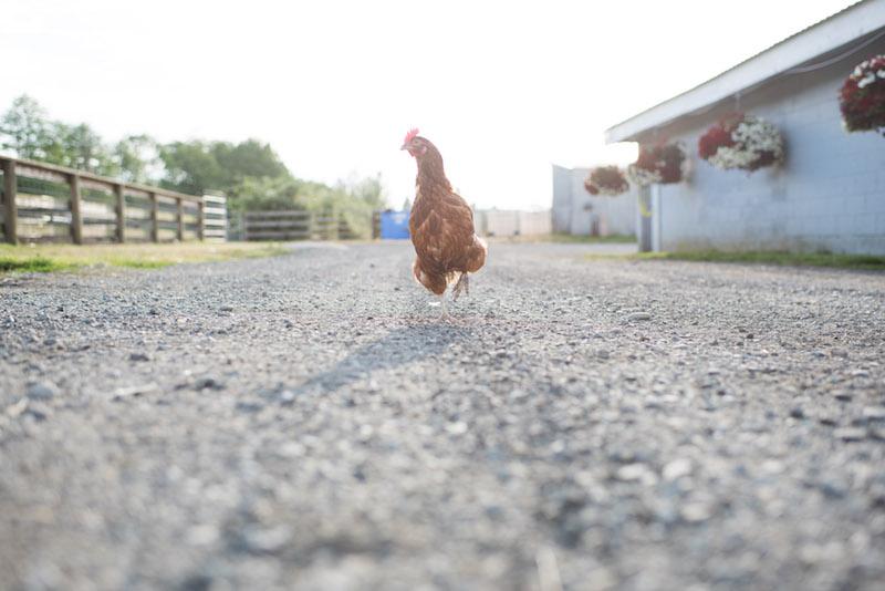 Pasture Raised Chicken.jpg