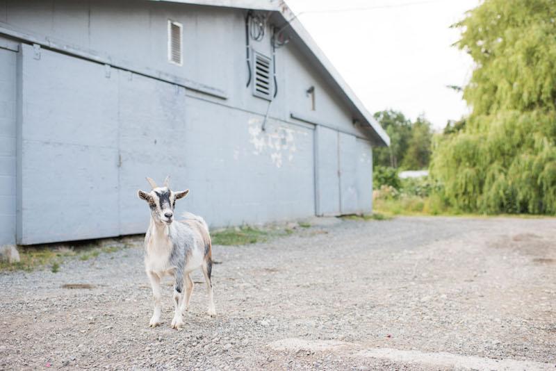 Pasture Raised Farm.jpg