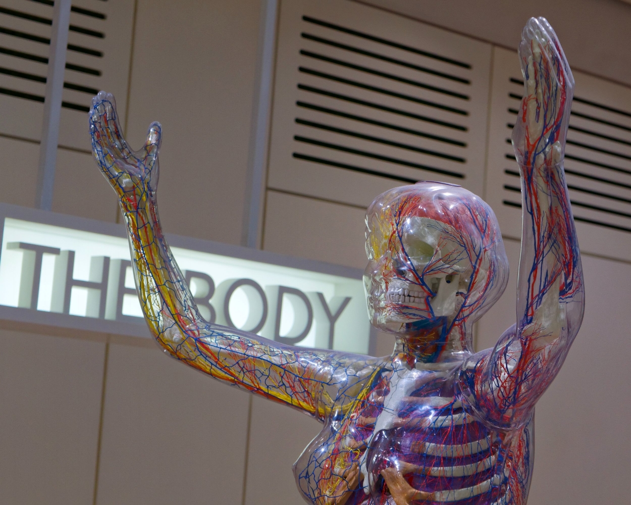 anatomical-terms-to-know-quizlet.jpg