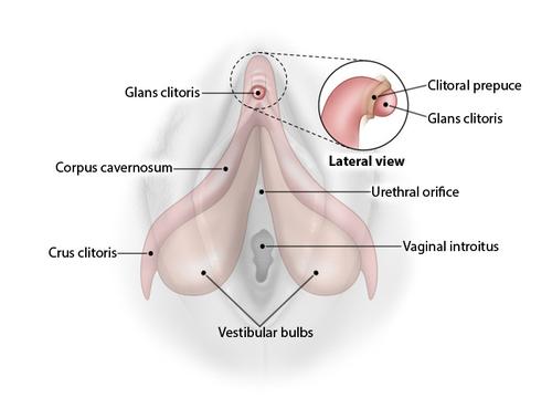 Smegma vagina