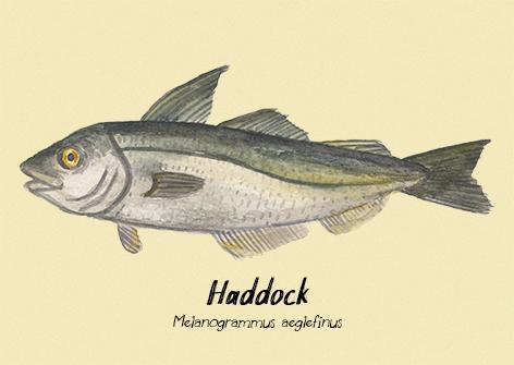 Haddock postcard.jpg