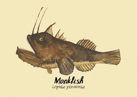 Monkfish postcard.jpg