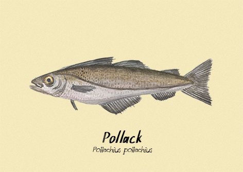 Pollock postcard.jpg