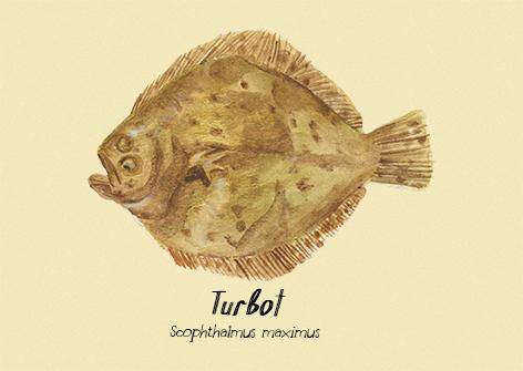 Turbot postcard.jpg