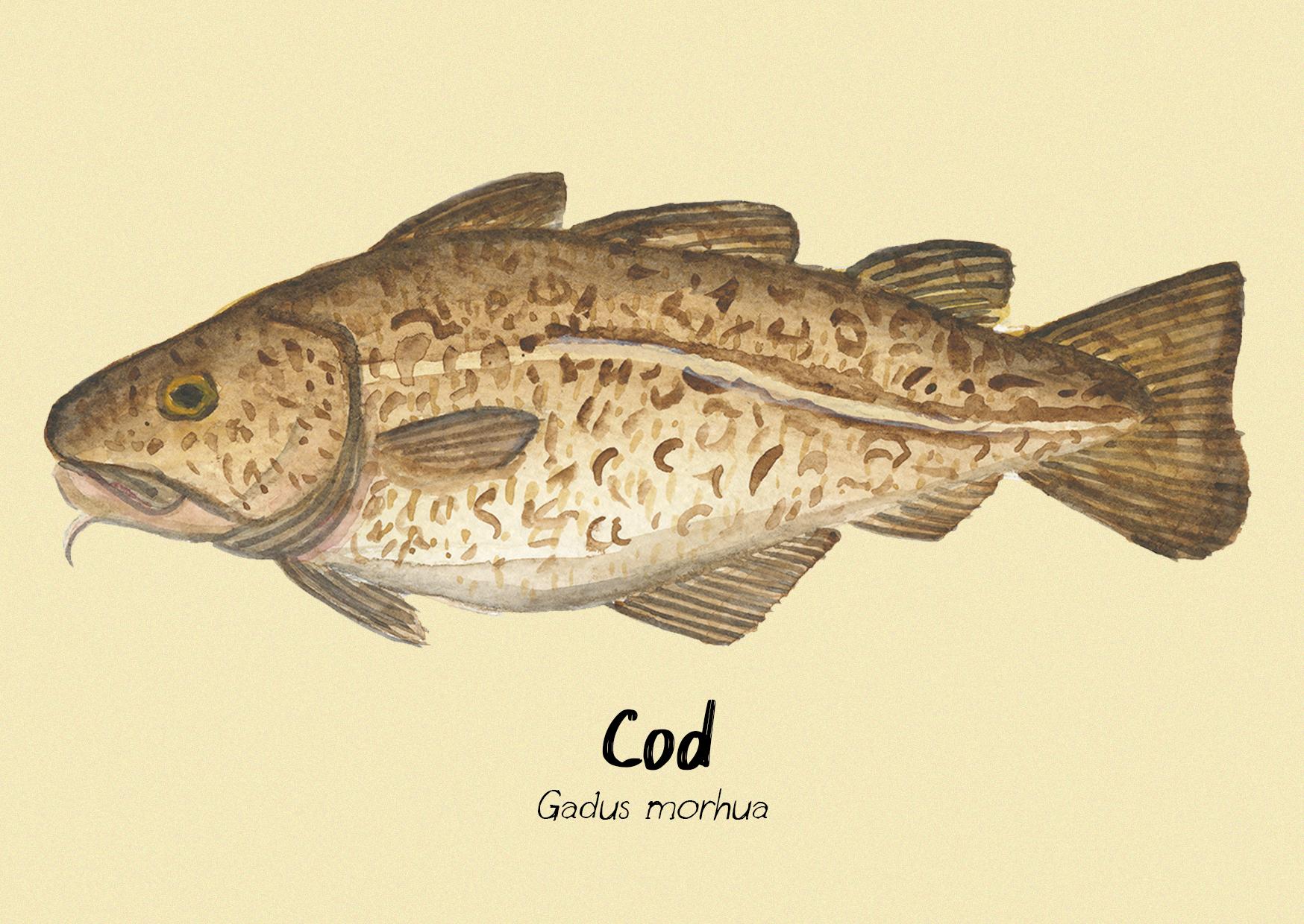 Cod postcard.jpg