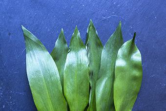 wild-garlic-web.jpg