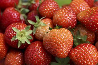 strawberries-web.jpg