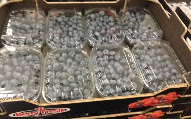 Blueberry Spanish.JPG