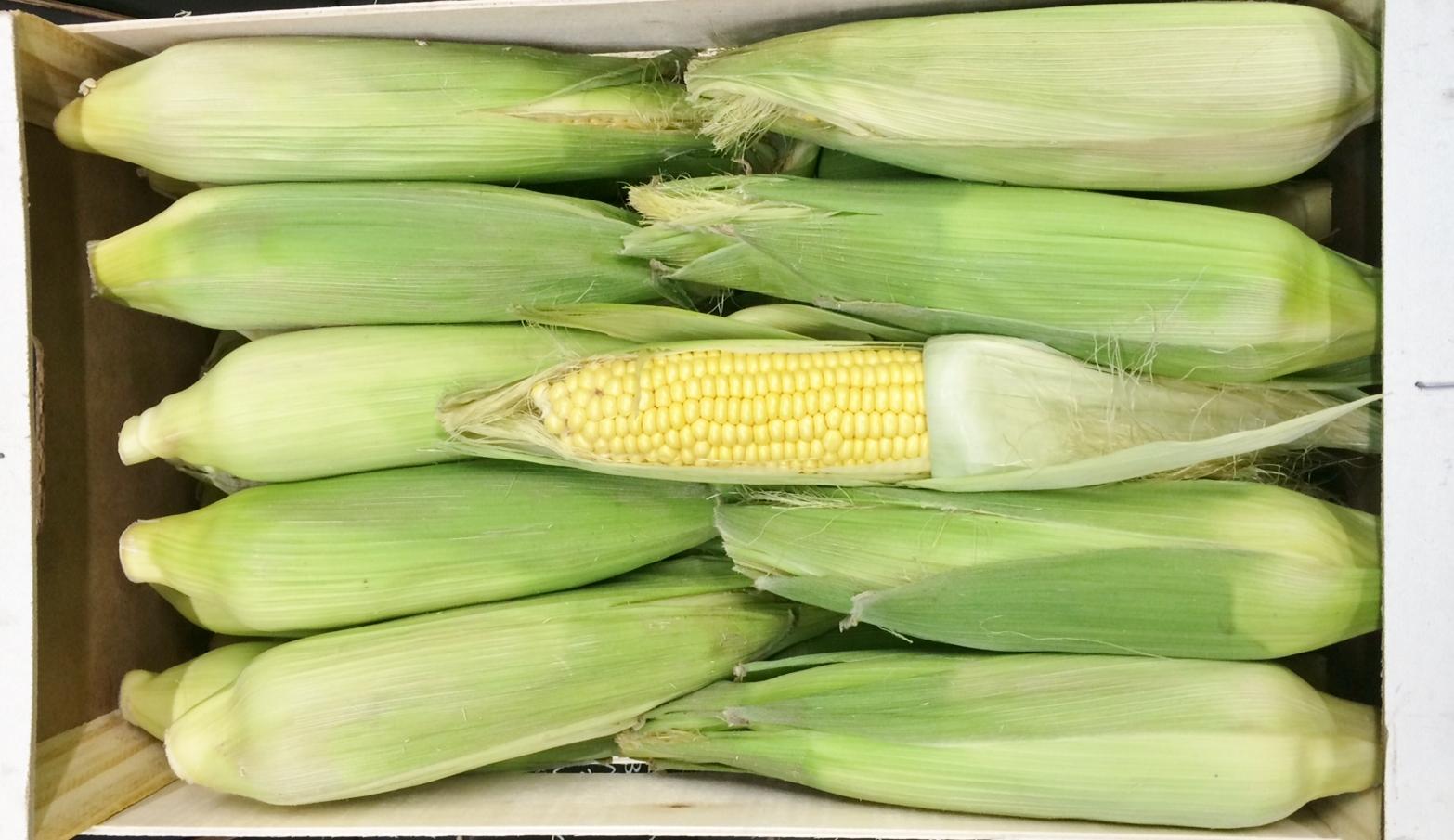 Corn on Cob x 30 Moroc.JPG