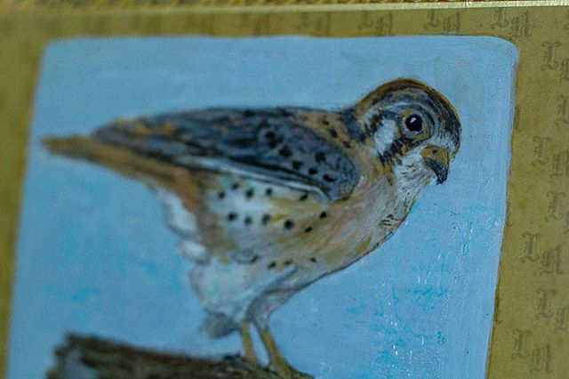 Close up of an American Kestrel painted on a cigar box.