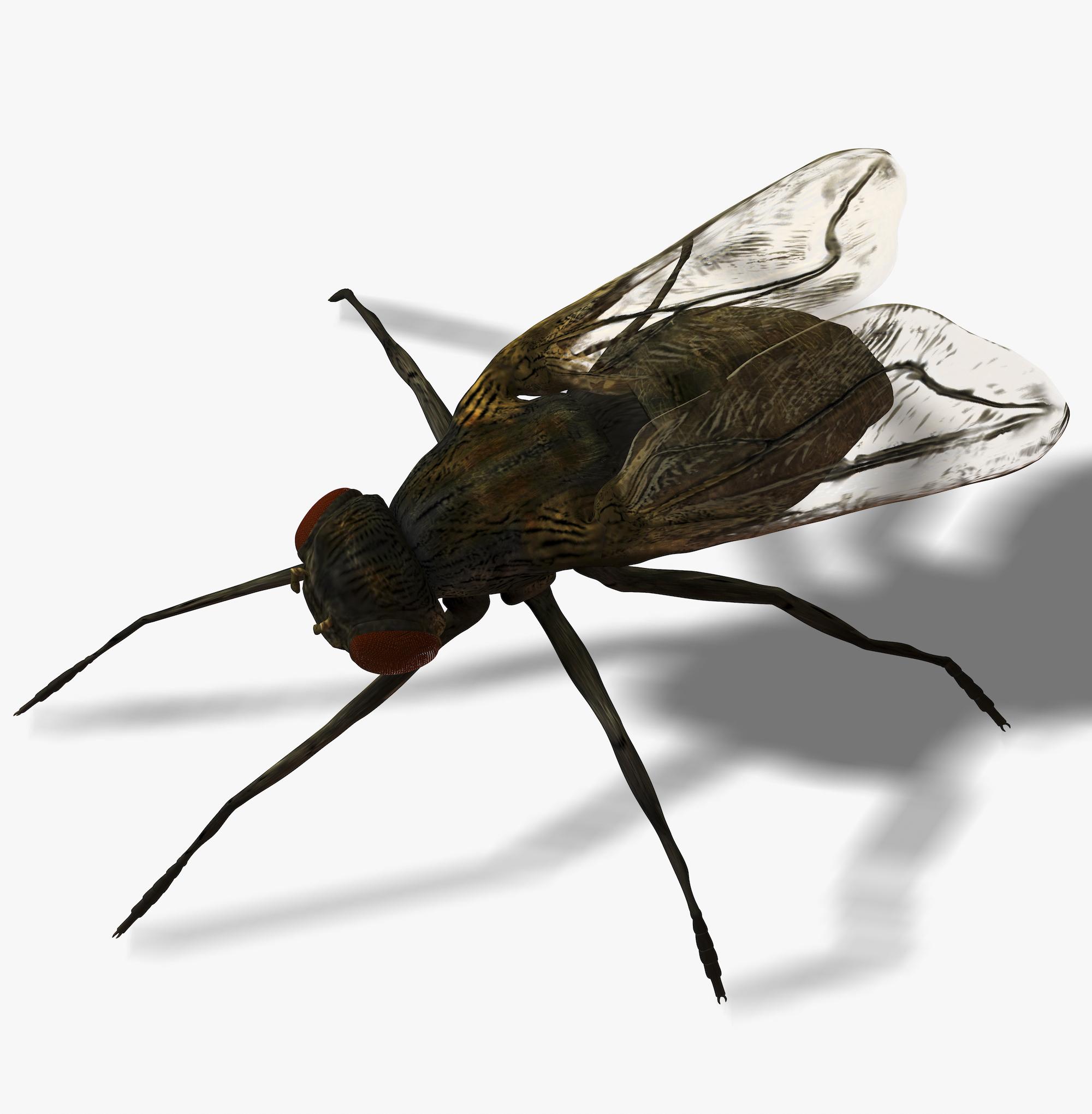 Fly Infestation Pest Control Warwickshire.jpg
