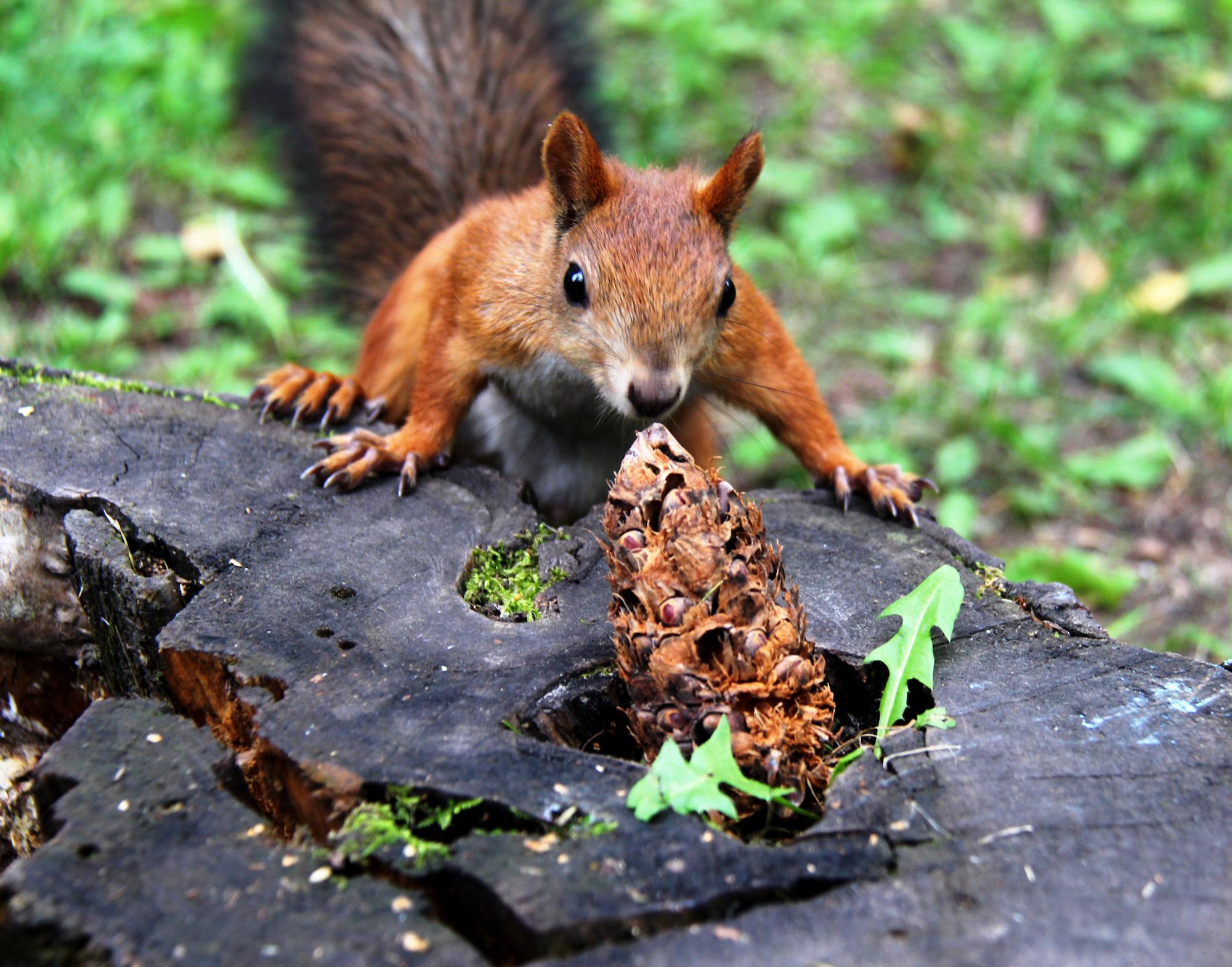 Squirrel Pest Control Warwickshire.jpg