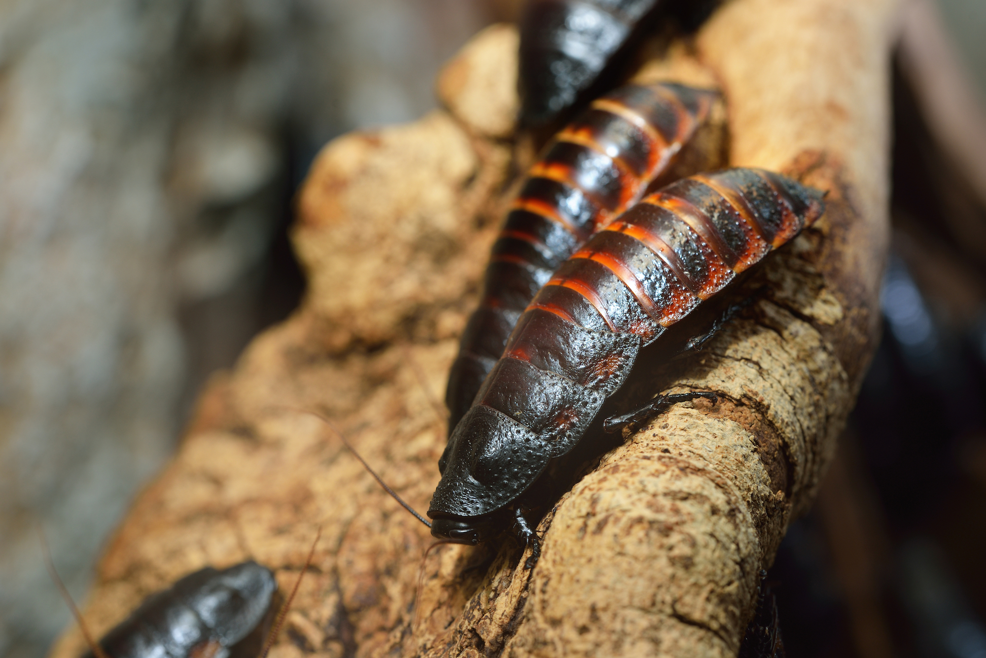 Cockroach Removal & Pest Control Services Warwickshire.jpg