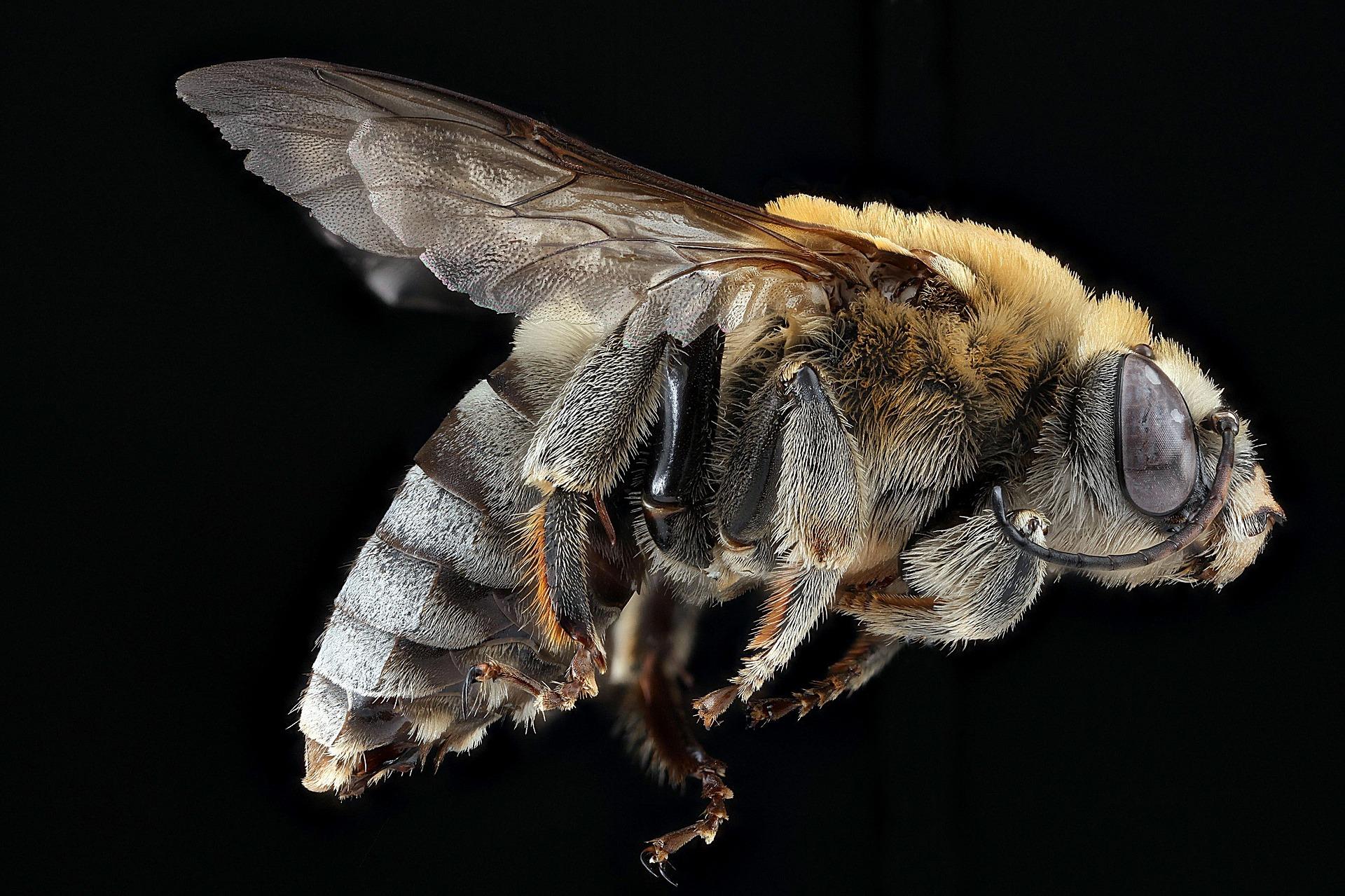 Bee Pest Control Services Warwickshire.jpg