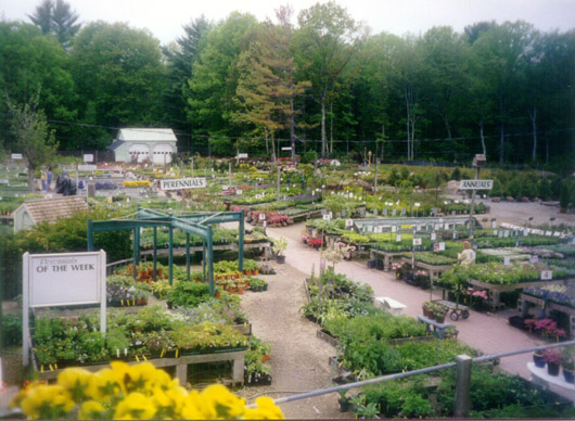 Perennials / Annuals / Trees & Shrubs