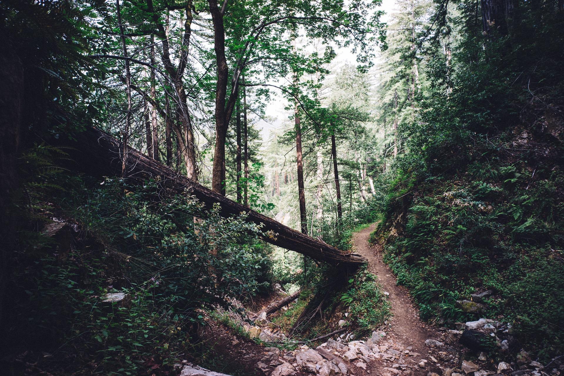 woods-1246177_1920.jpg