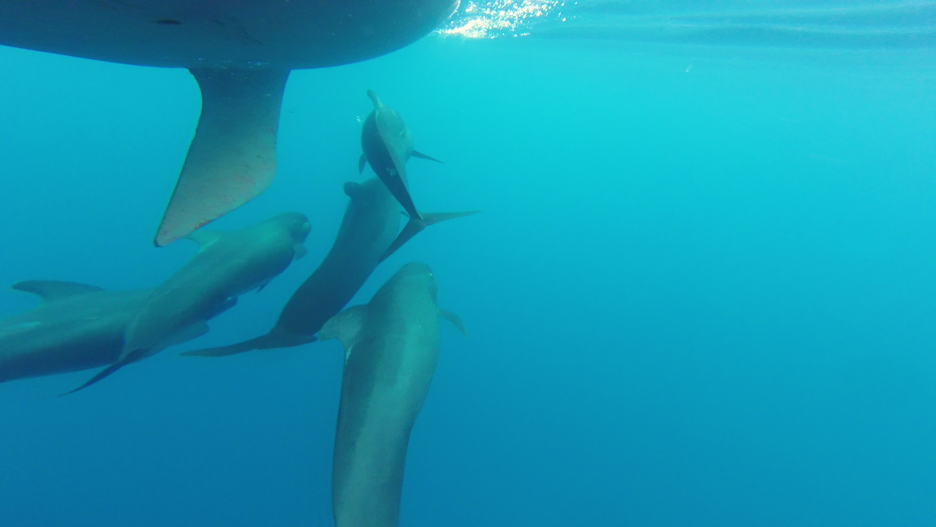 A huge pod of Pilot whales play below Hugo's boat, during one of his solo sailing trips