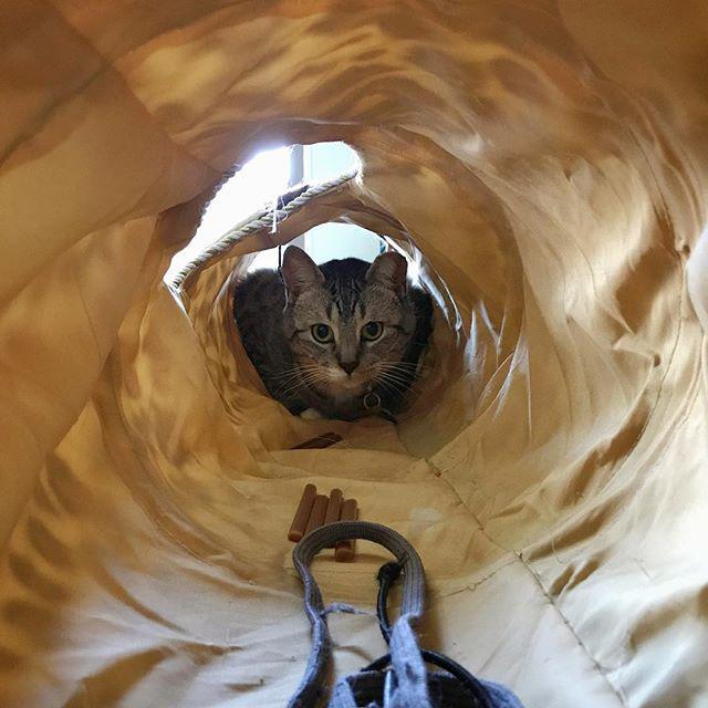 tanktunnel.jpg