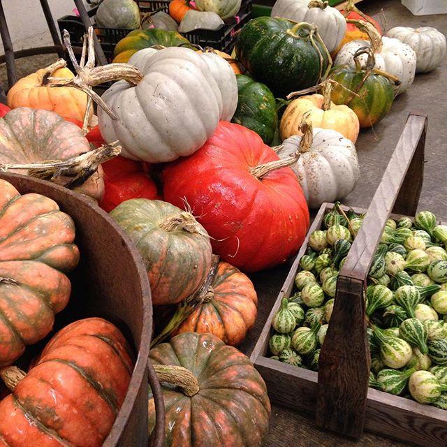 October-feature-pumpkins.jpg