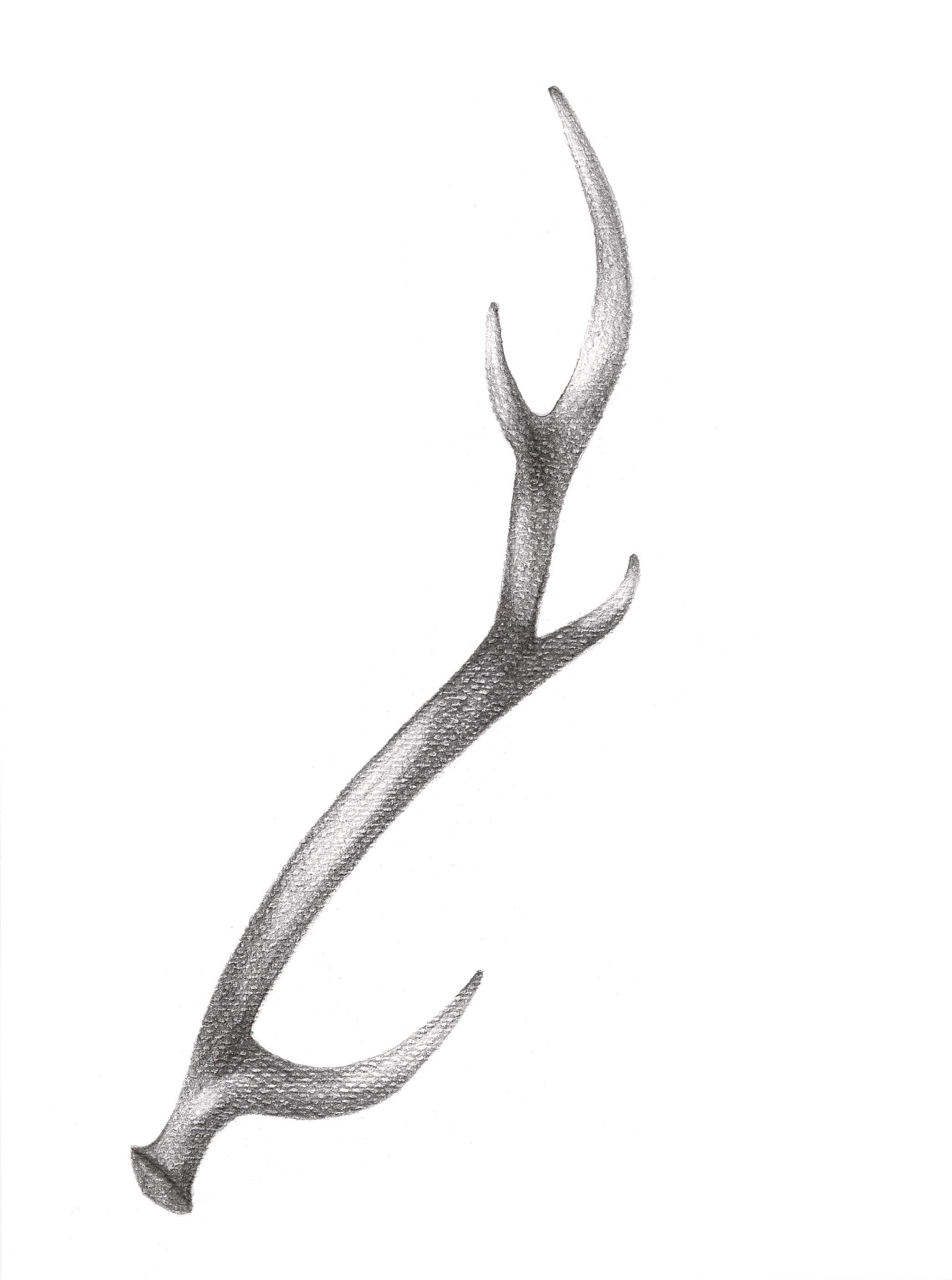 antlers print quality.jpg