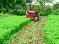 organic-farm.jpg