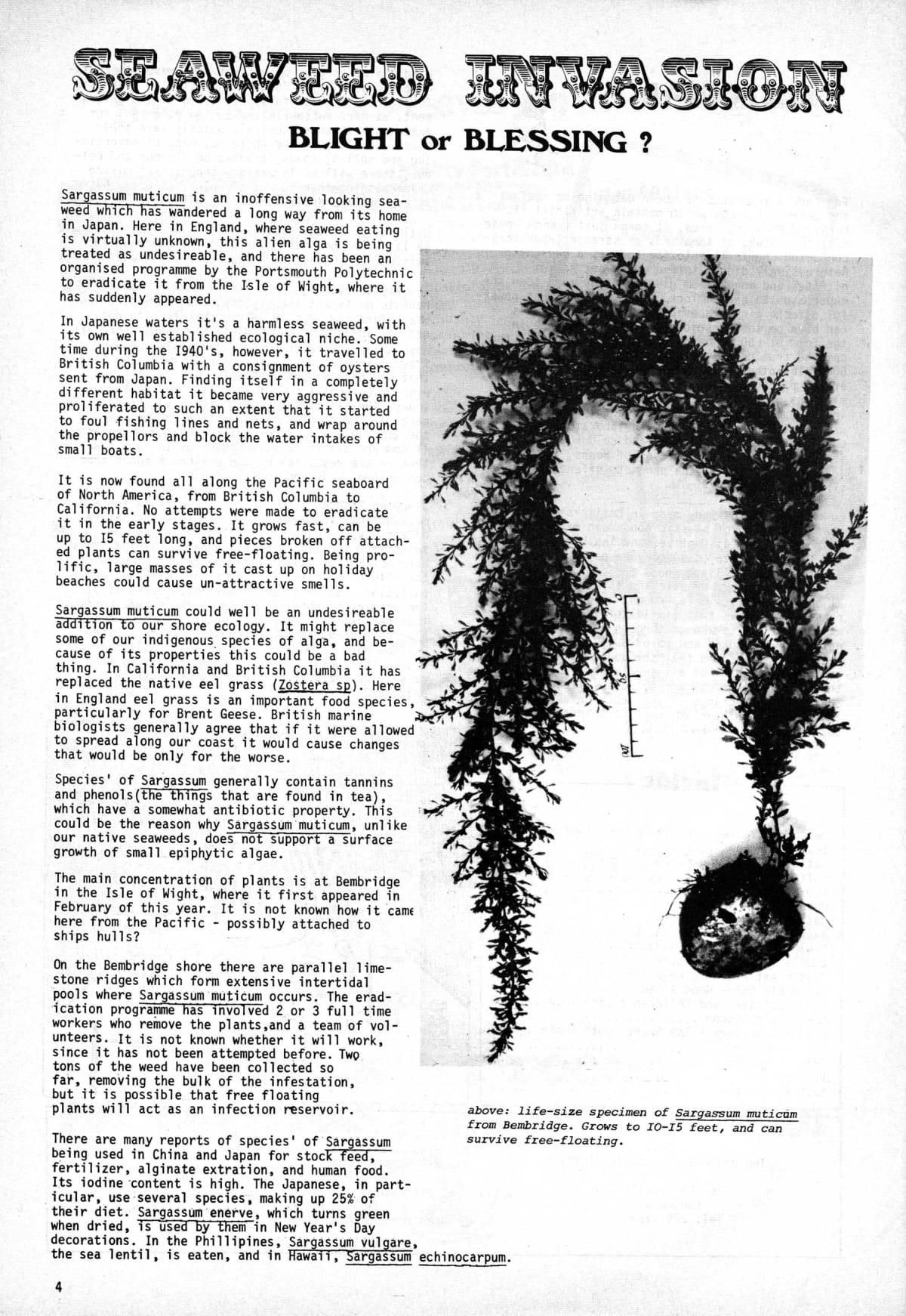 seed-v2-n7-july1973-04.jpg