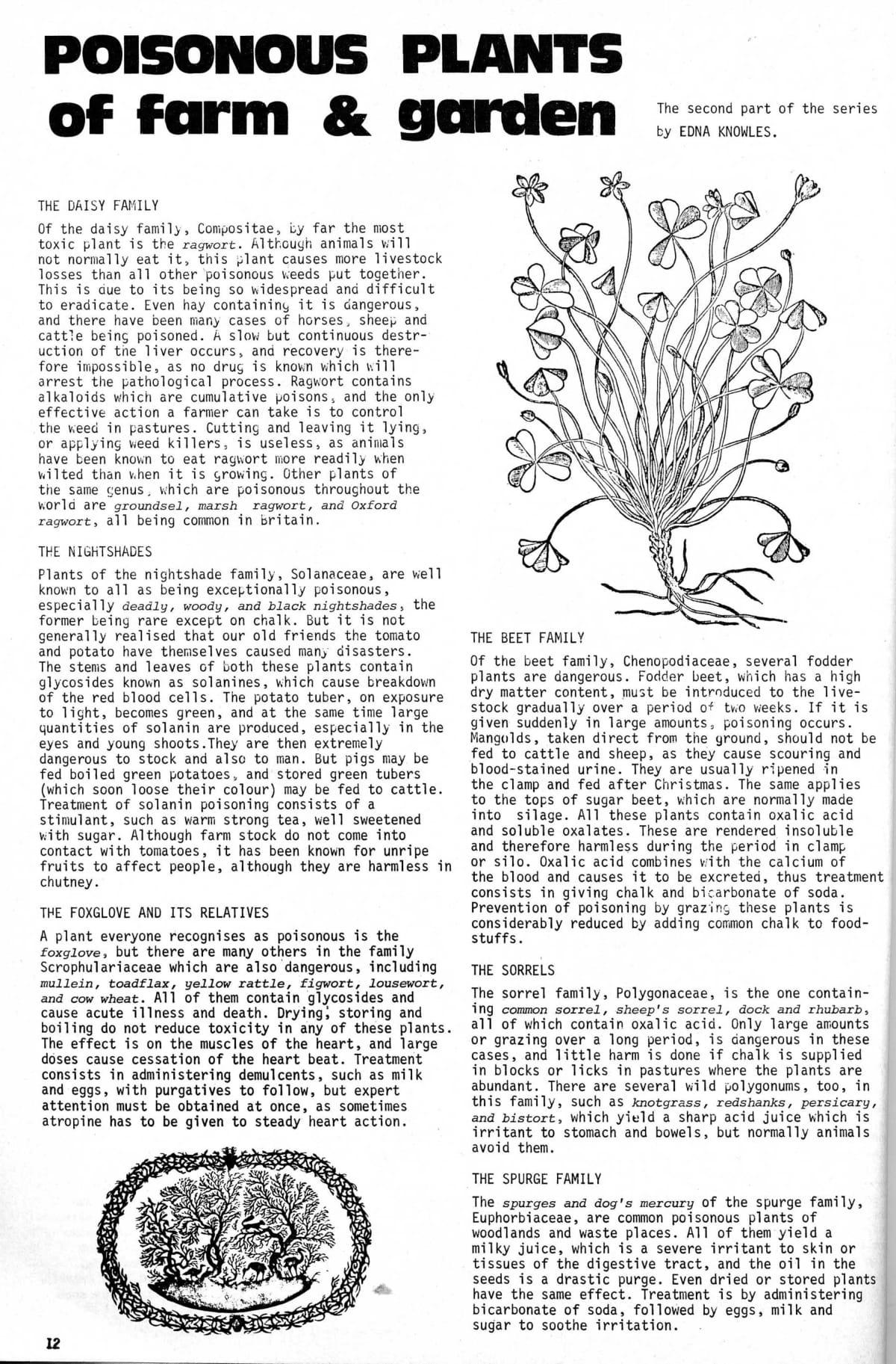 seed-v3-n1-jan1974-12.jpg