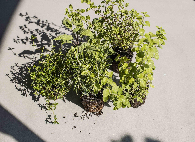 Planter Herbes Aromatiques Jardiniere planter tout au long de l'année - conseils botany folk