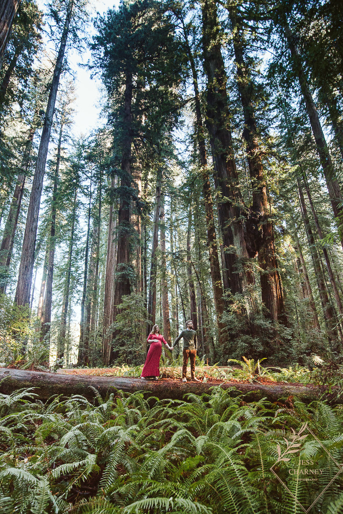 Maternity Session in the Redwoods