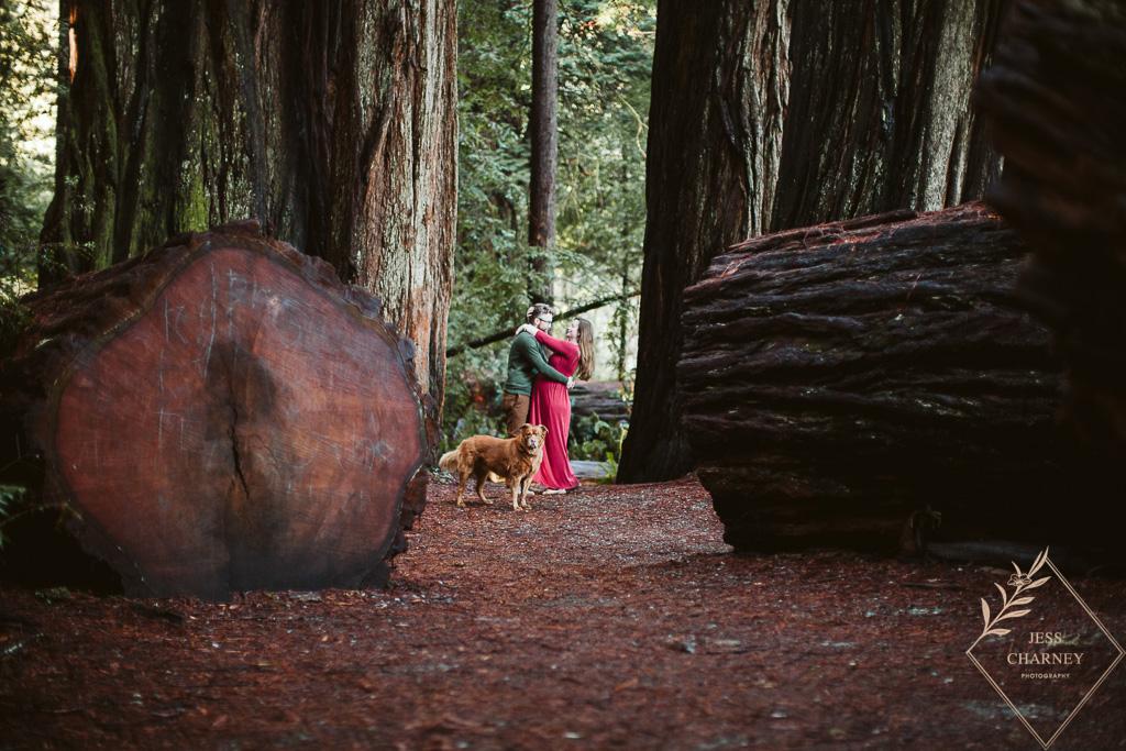 Redwoods Maternity Session