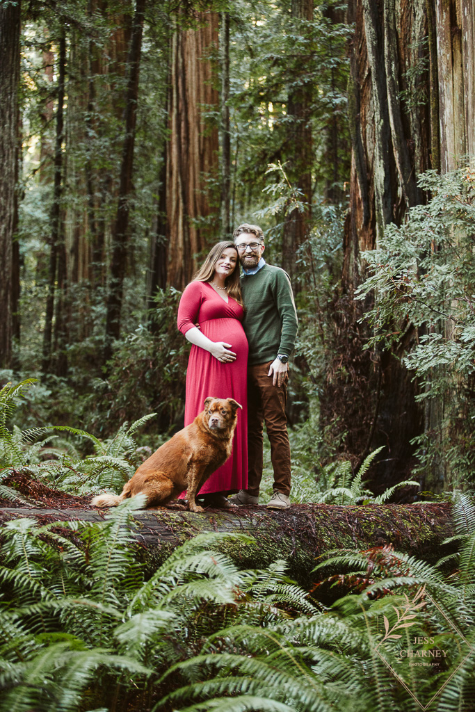 Maternity Shoot in the Redwoods with dog | Southern Oregon Photographer