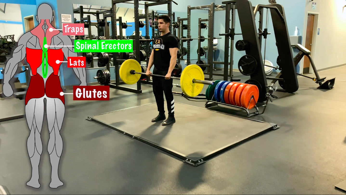 what muscles do deadlifts target