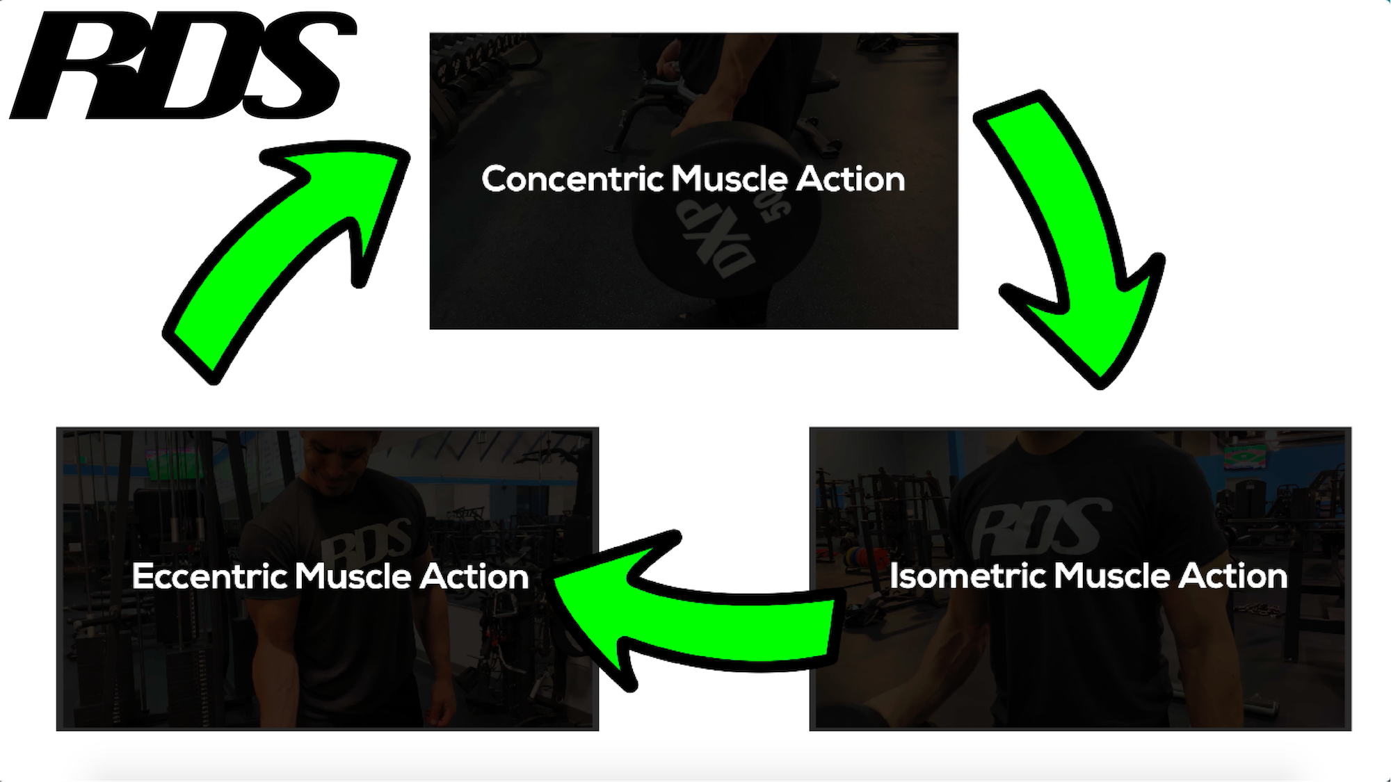 muscleactioncombo-01.png