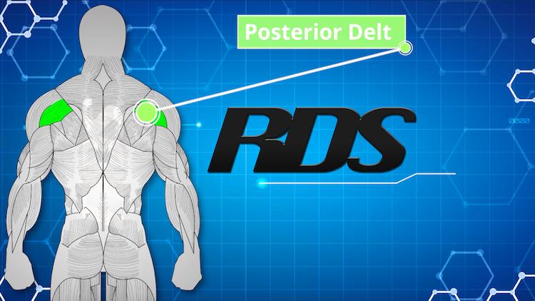 posterior delt