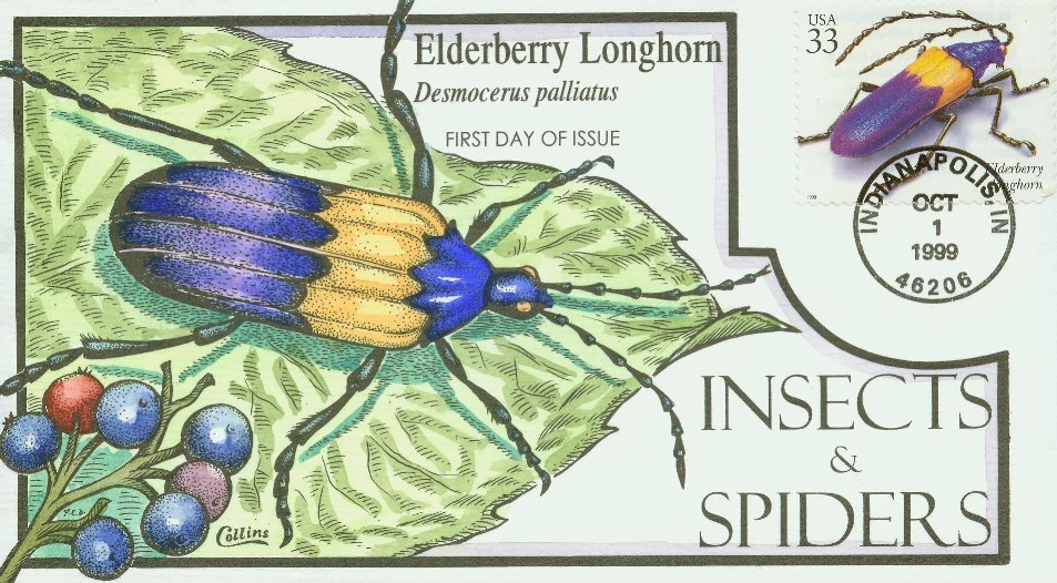 elderberrylonghorn_c.jpg
