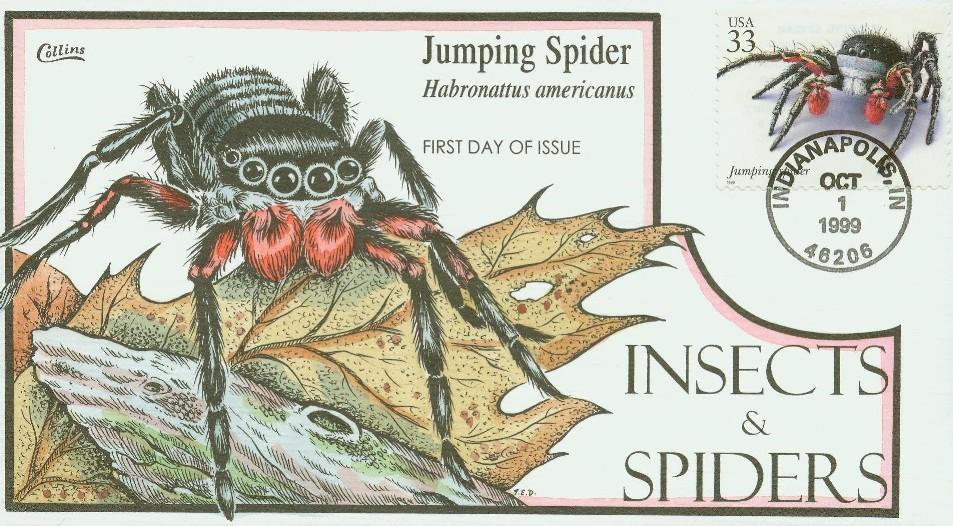 jumpingspider_c.jpg