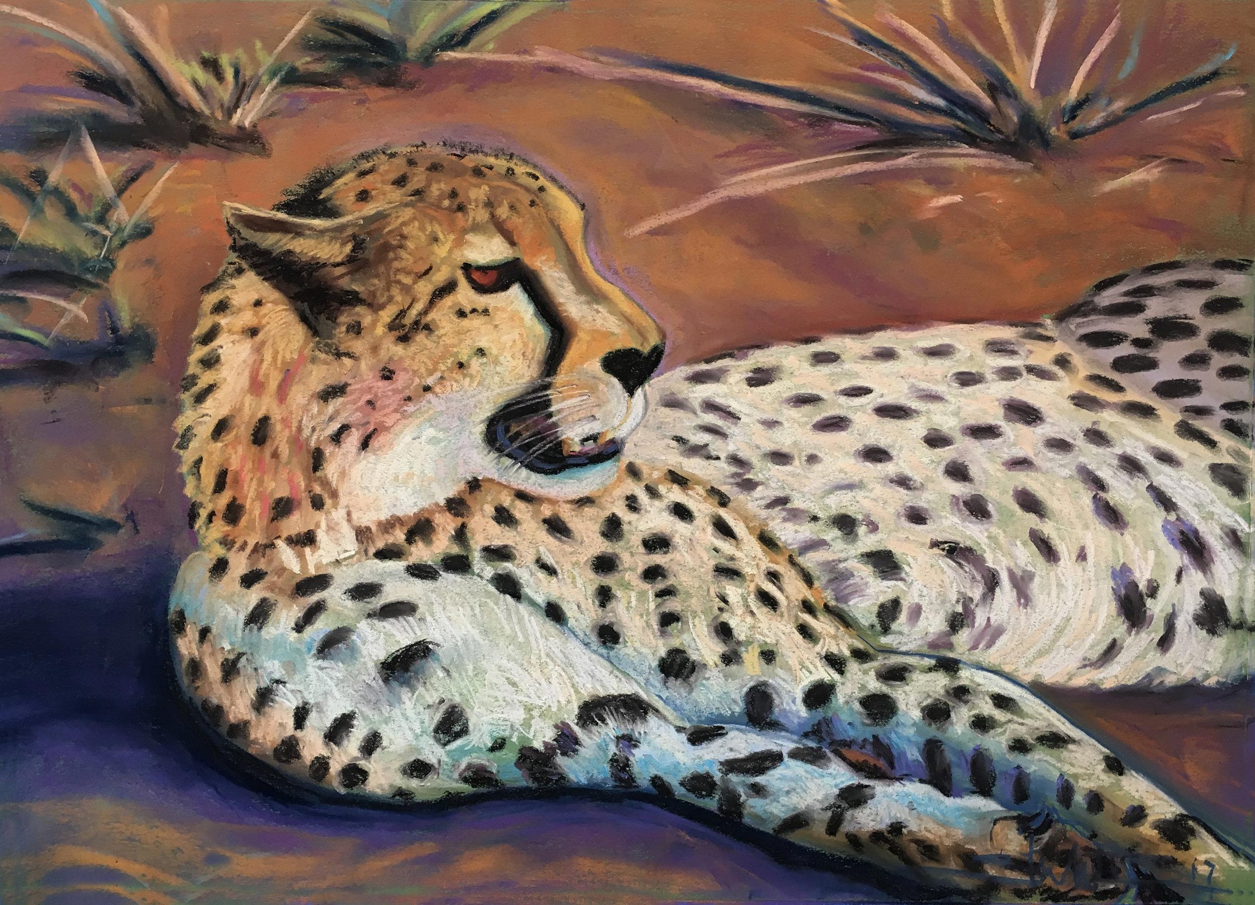 Resting Cheetah  20 x 28  Pastel on Paper  2017