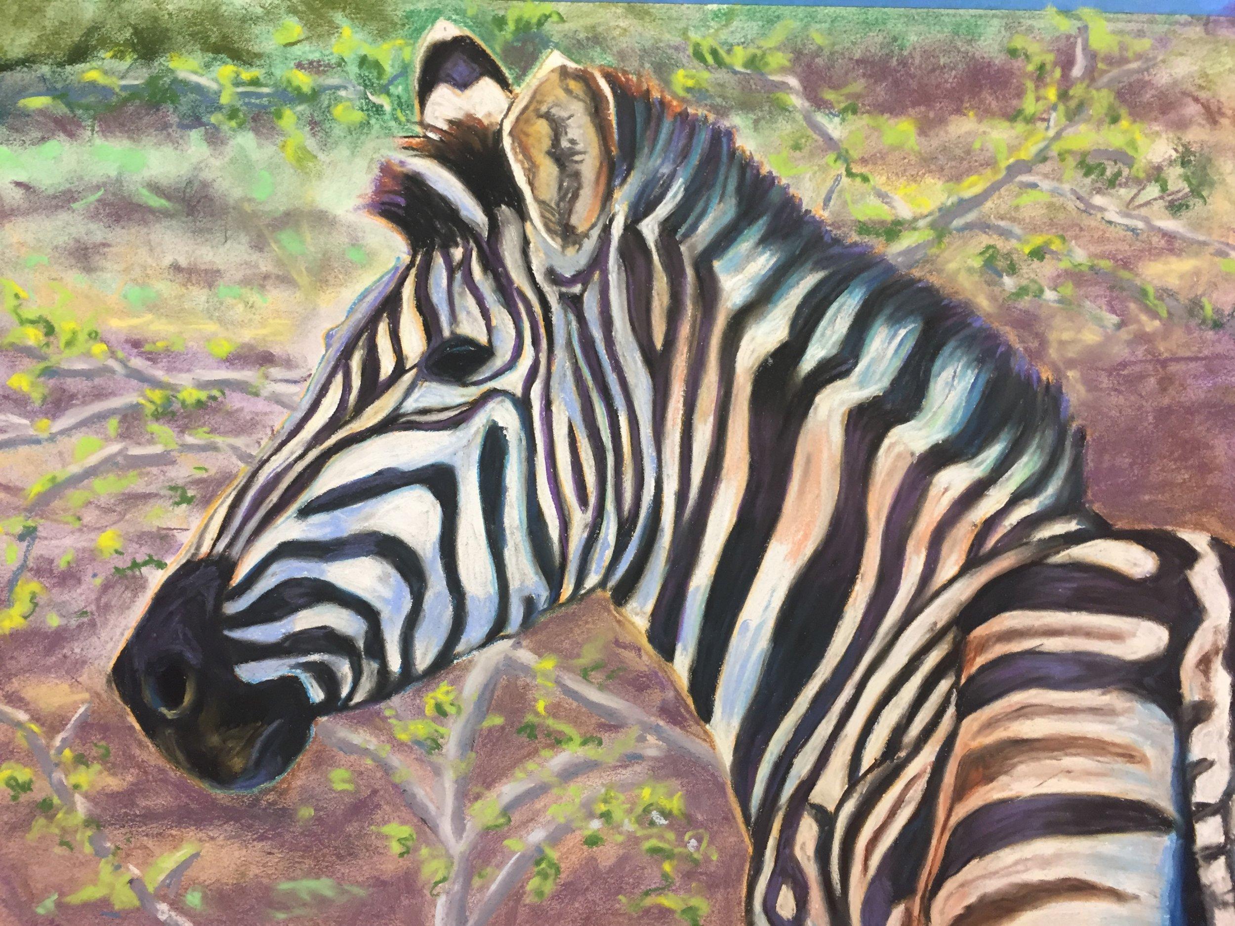 Zebra  20 x 28  Pastel on Paper  2017
