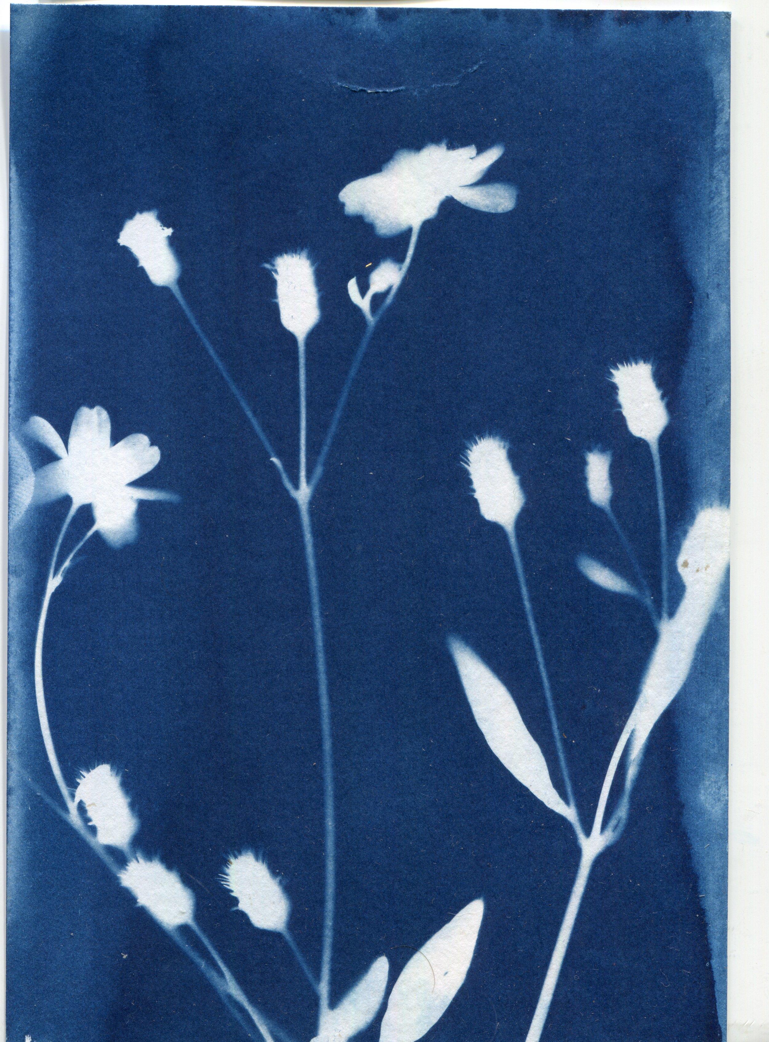 botanical001.jpg